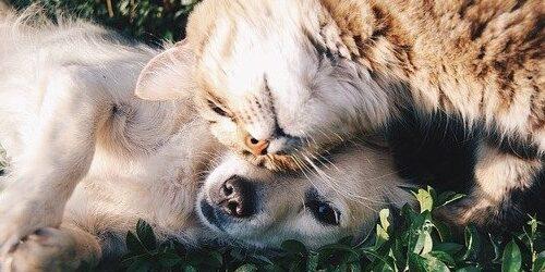 Spårsändare till djur hund katt